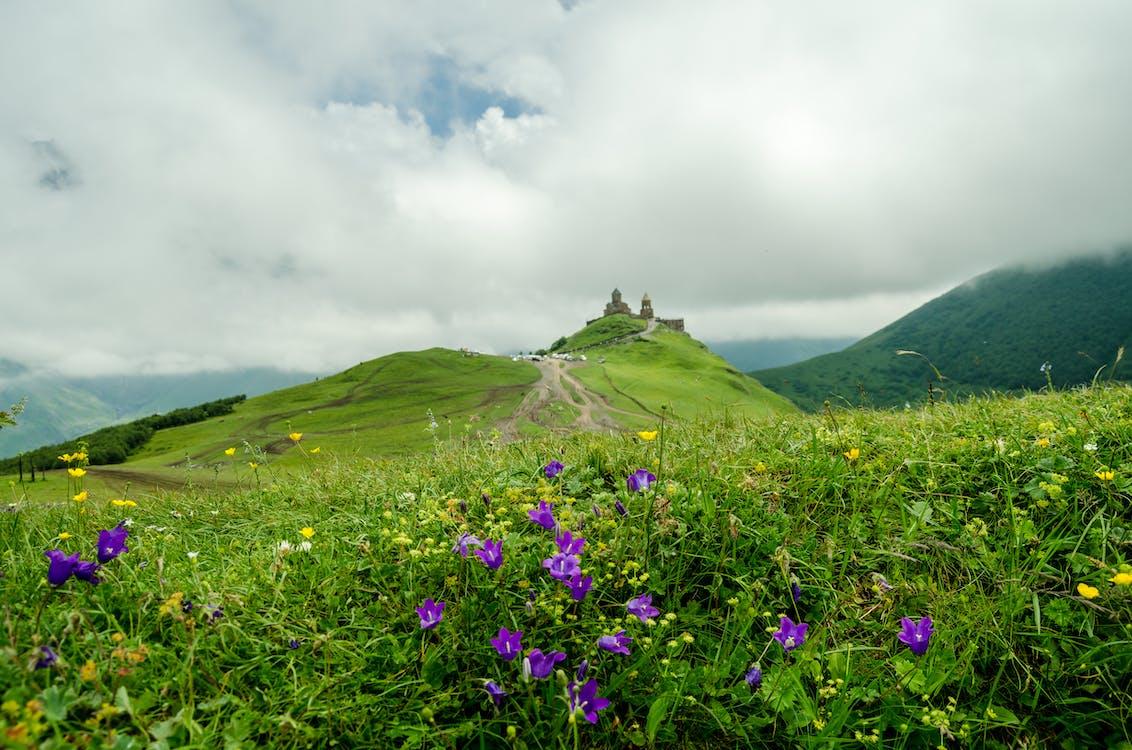 bergen, bloemen, bloemen in de lente