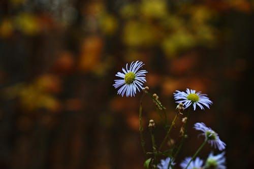 Безкоштовне стокове фото на тему «великий план, глибина різкості, делікатний, дика квітка»