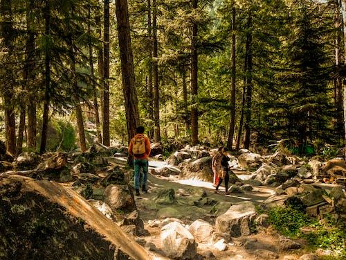 Foto d'estoc gratuïta de bonic, bosc, caminada, en el medi natural
