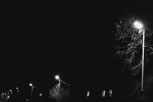 คลังภาพถ่ายฟรี ของ กลางคืน, ต้นไม้, เสาไฟ, โคมไฟ