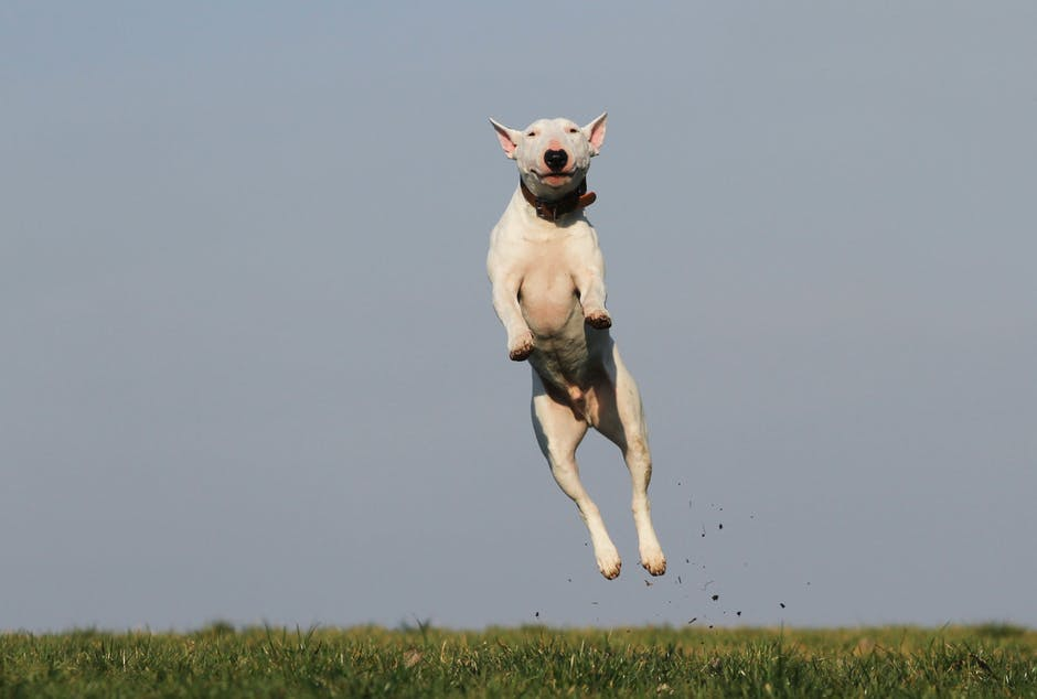 New free stock photo of field, animal, dog