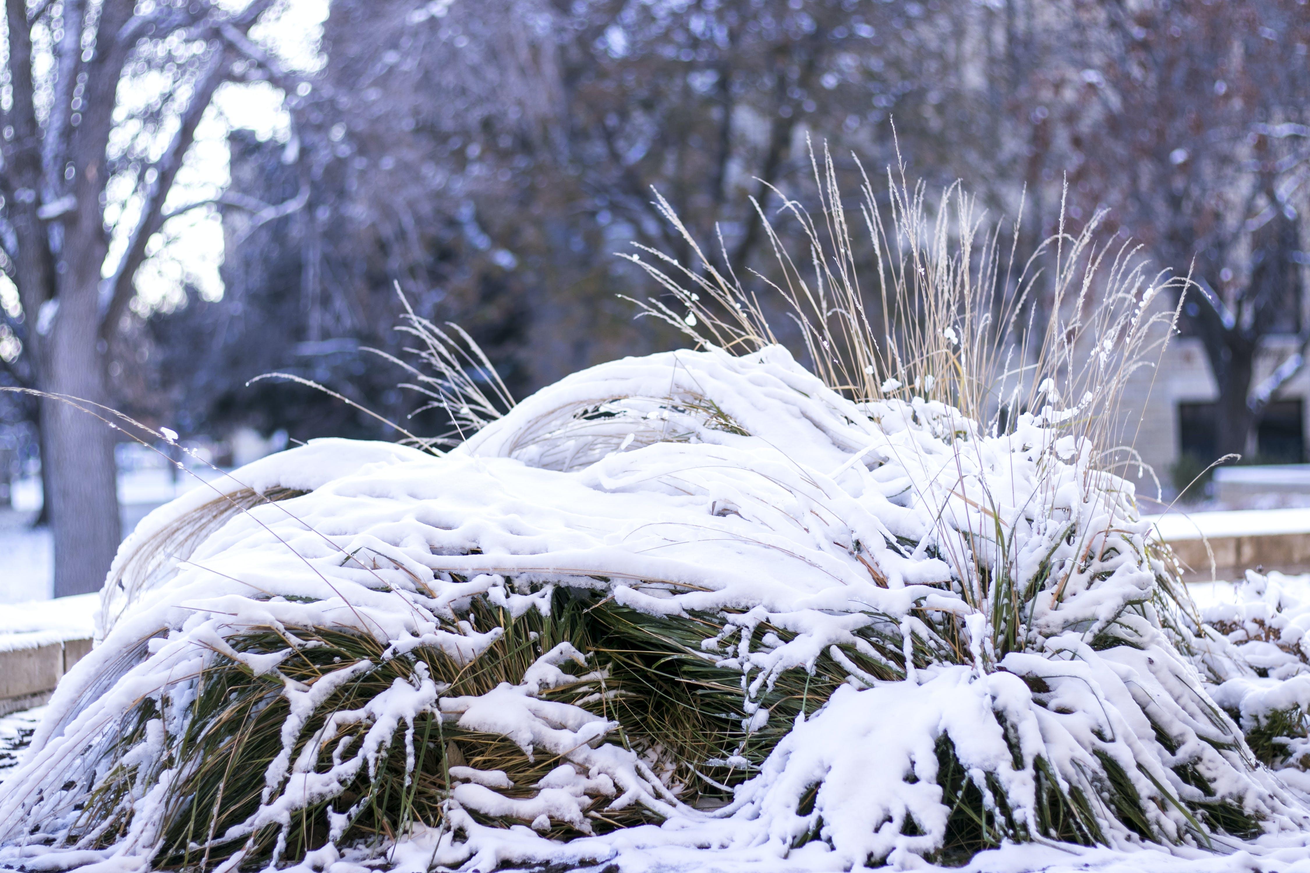 Darmowe zdjęcie z galerii z śnieg, winterbeauty, zima