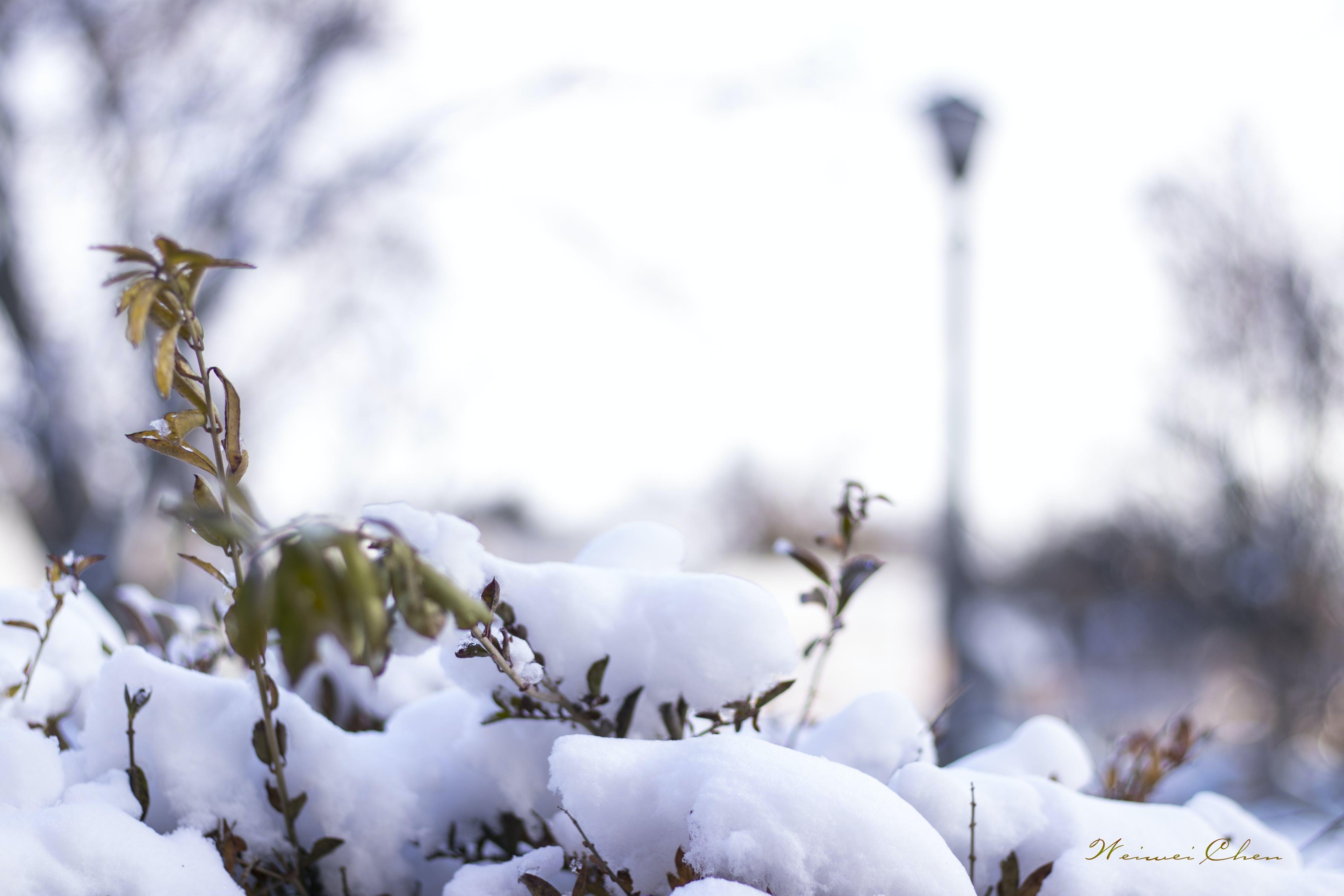 Darmowe zdjęcie z galerii z zima