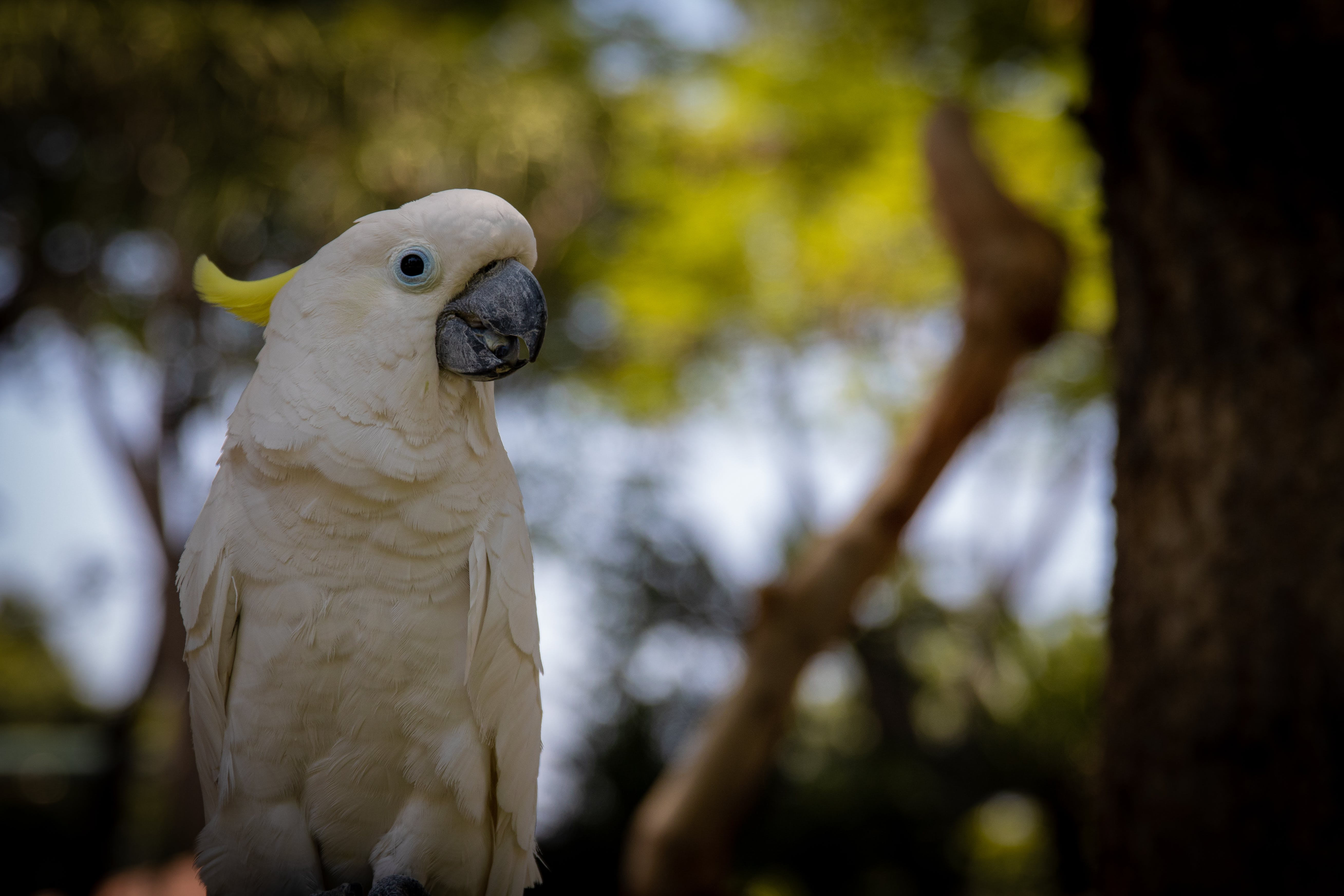 Photography of a White Parrot