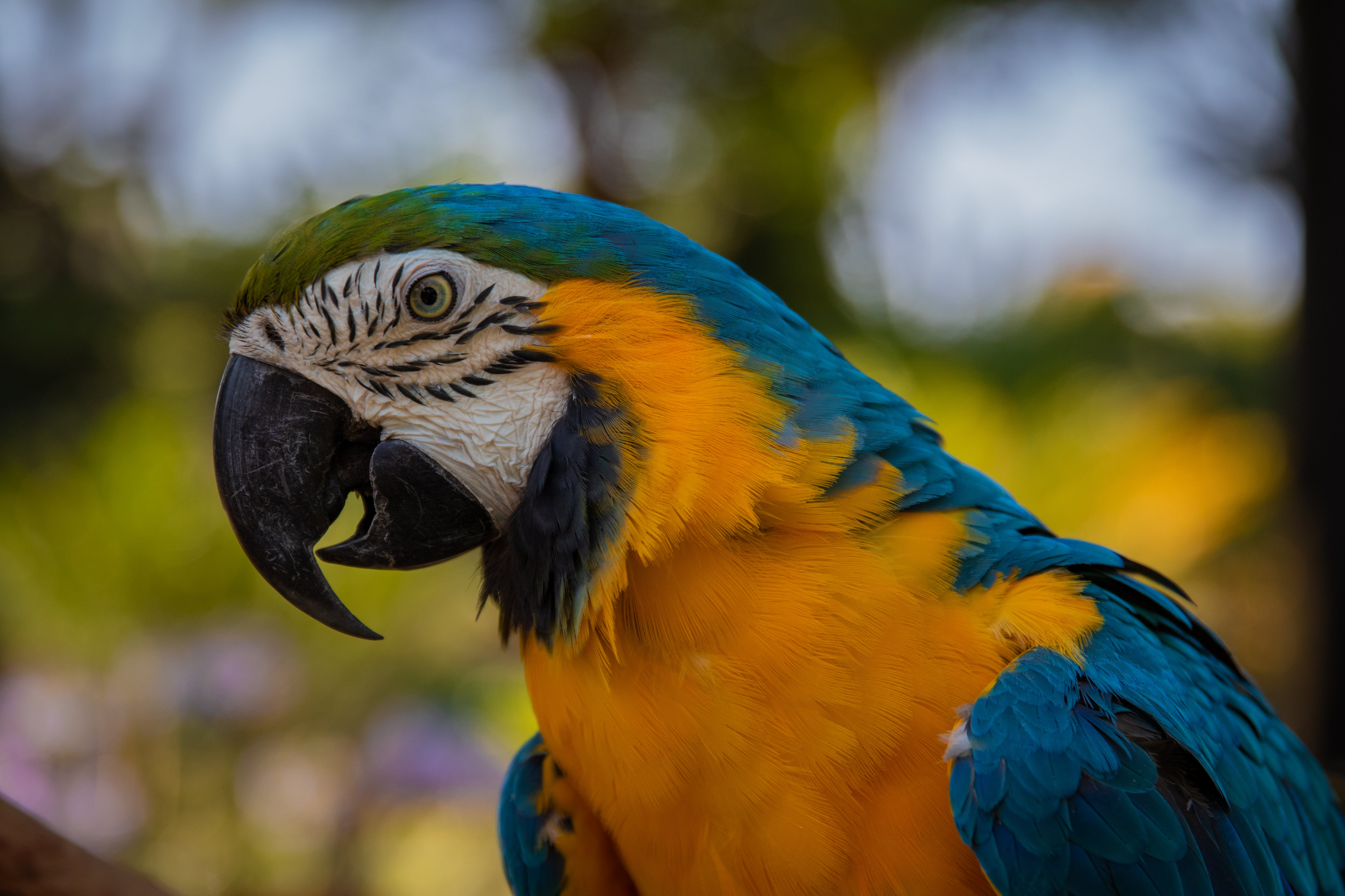 Close-Up Photo of Macaw