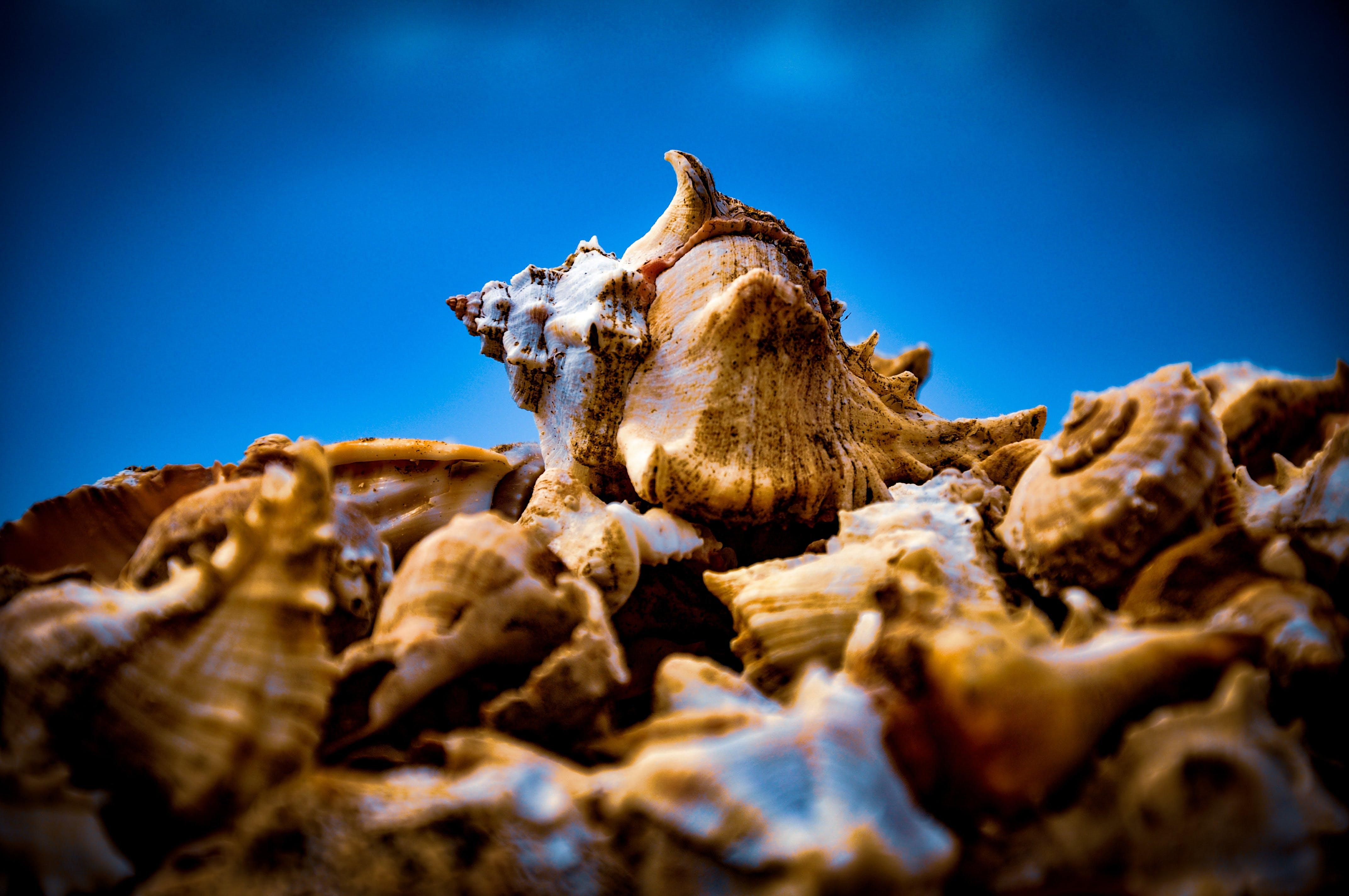 Kostenloses Stock Foto zu braun, makrofotografie, mollusken, muscheln