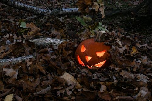 かぼちゃ, シーズン, ジャックランタン, スマイルの無料の写真素材