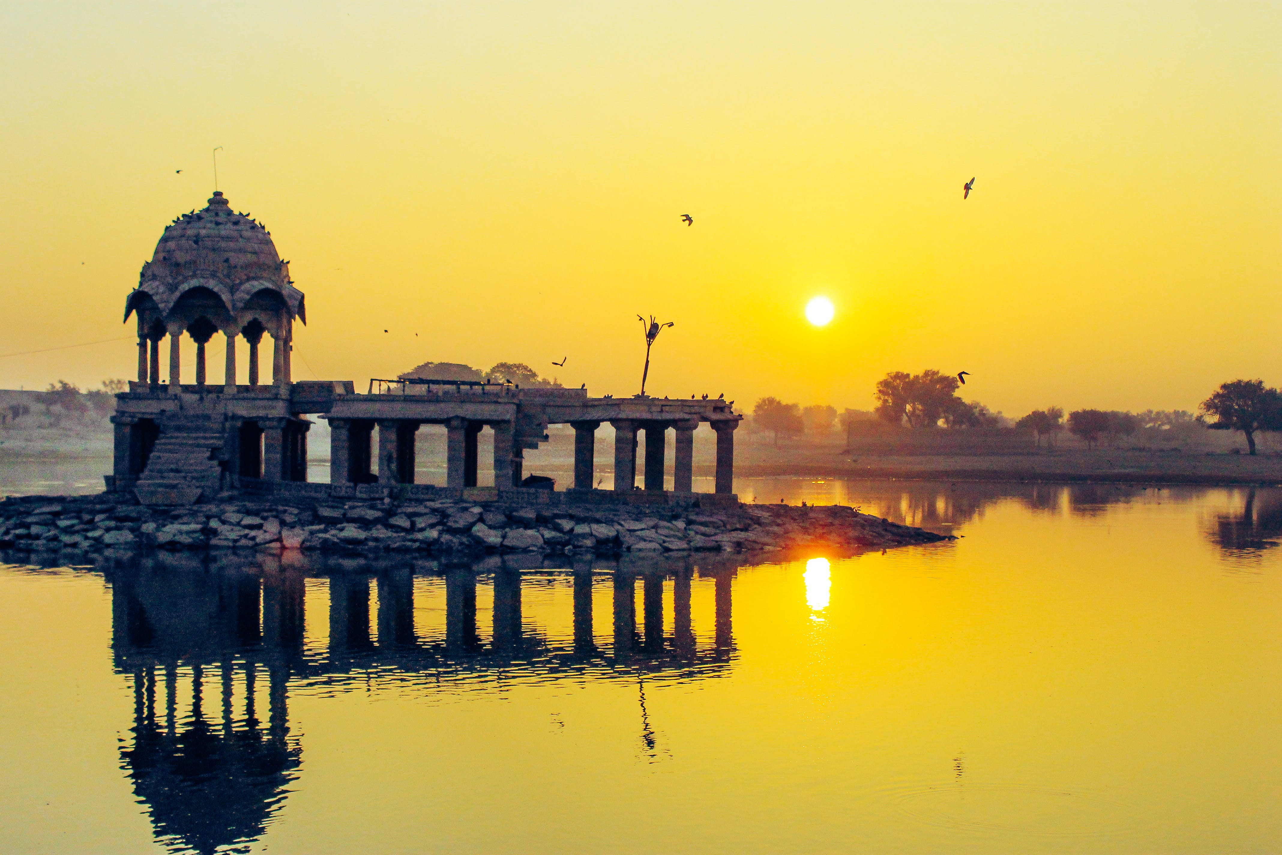 Free stock photo of birds, early morning, golden hour, india