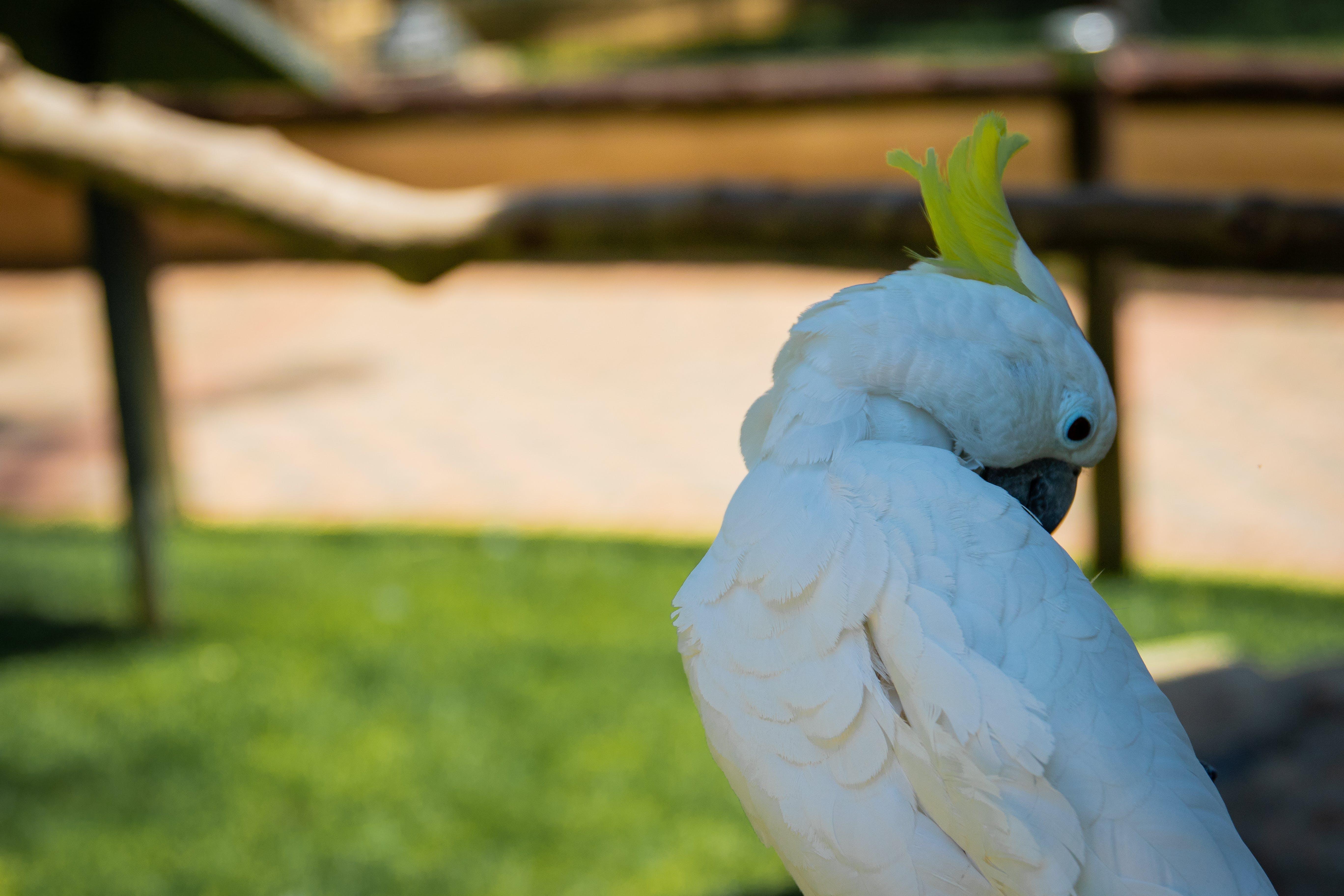 Free stock photo of nature, bird, cute, animals