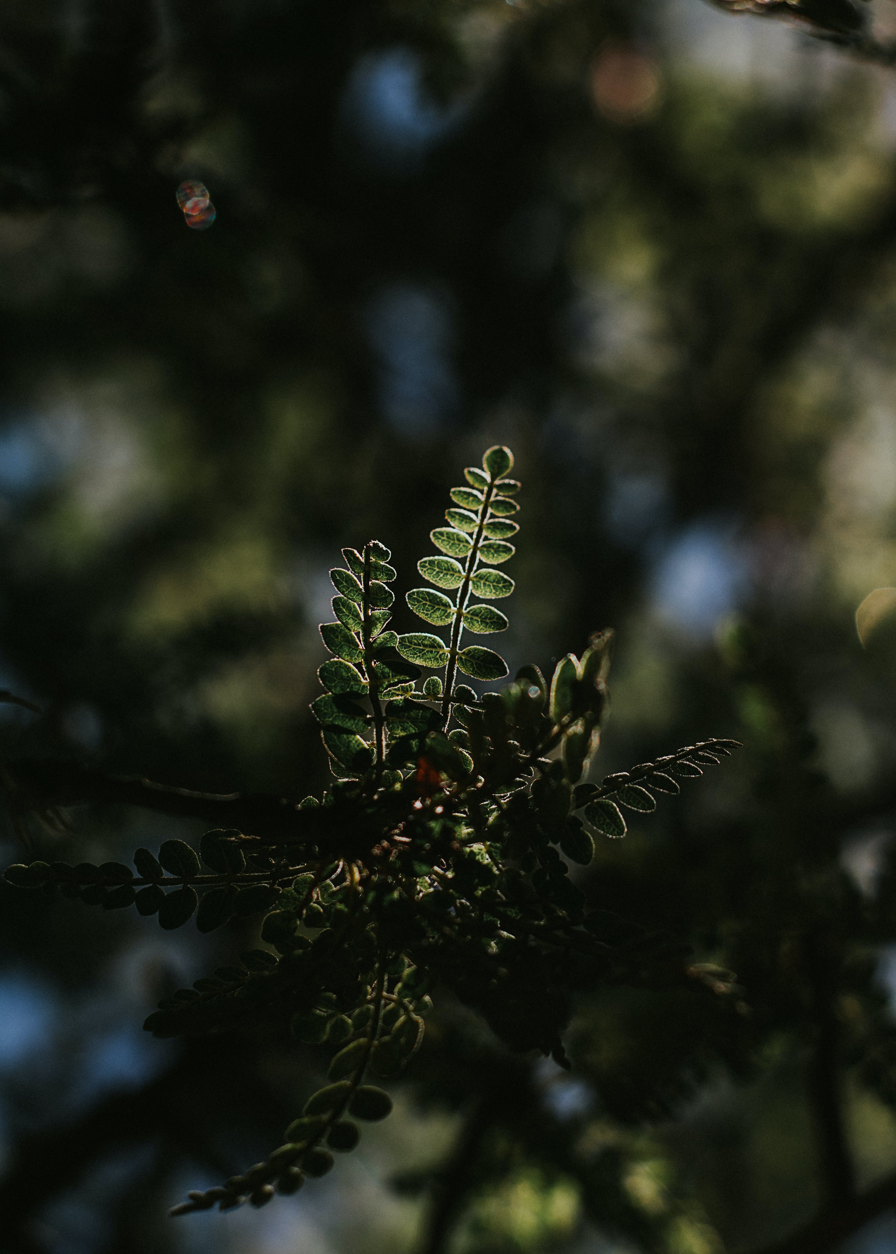 Close-up Photography of Plant