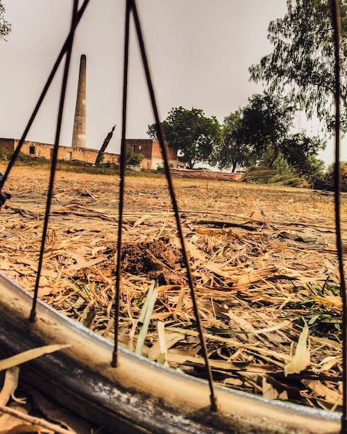 Darmowe zdjęcie z galerii z drzewo, rama rowerowa, trawa, wioska