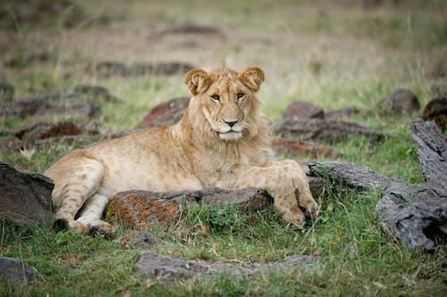 Ilmainen kuvapankkikuva tunnisteilla eläin, eläinkuvaus, eläintarha, keskittyminen