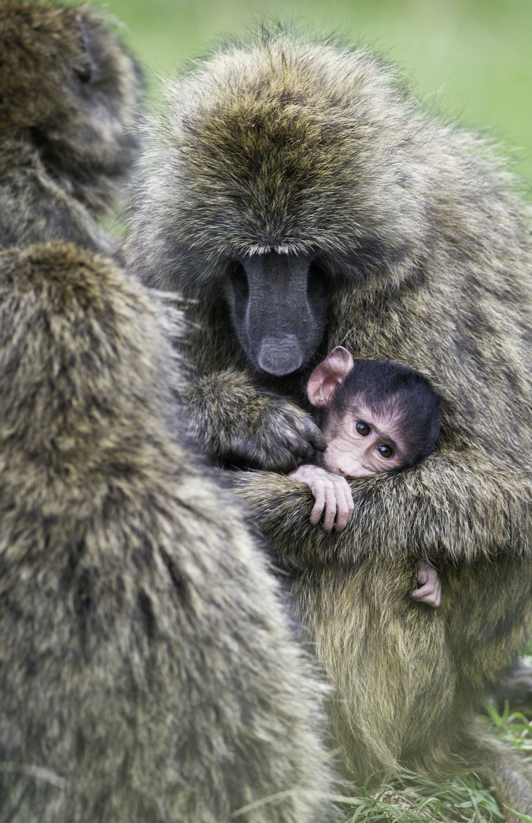 Gratis lagerfoto af baby, dyr, dyreliv, nuttet