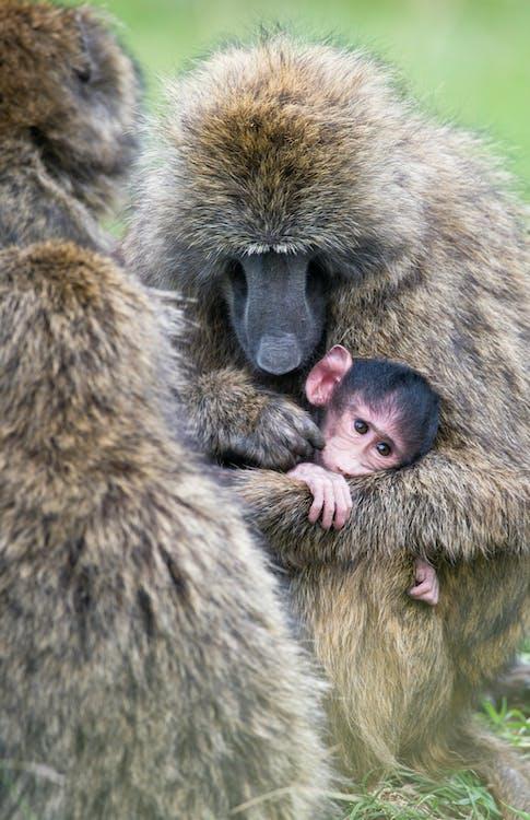 animal, animales salvajes, bebé