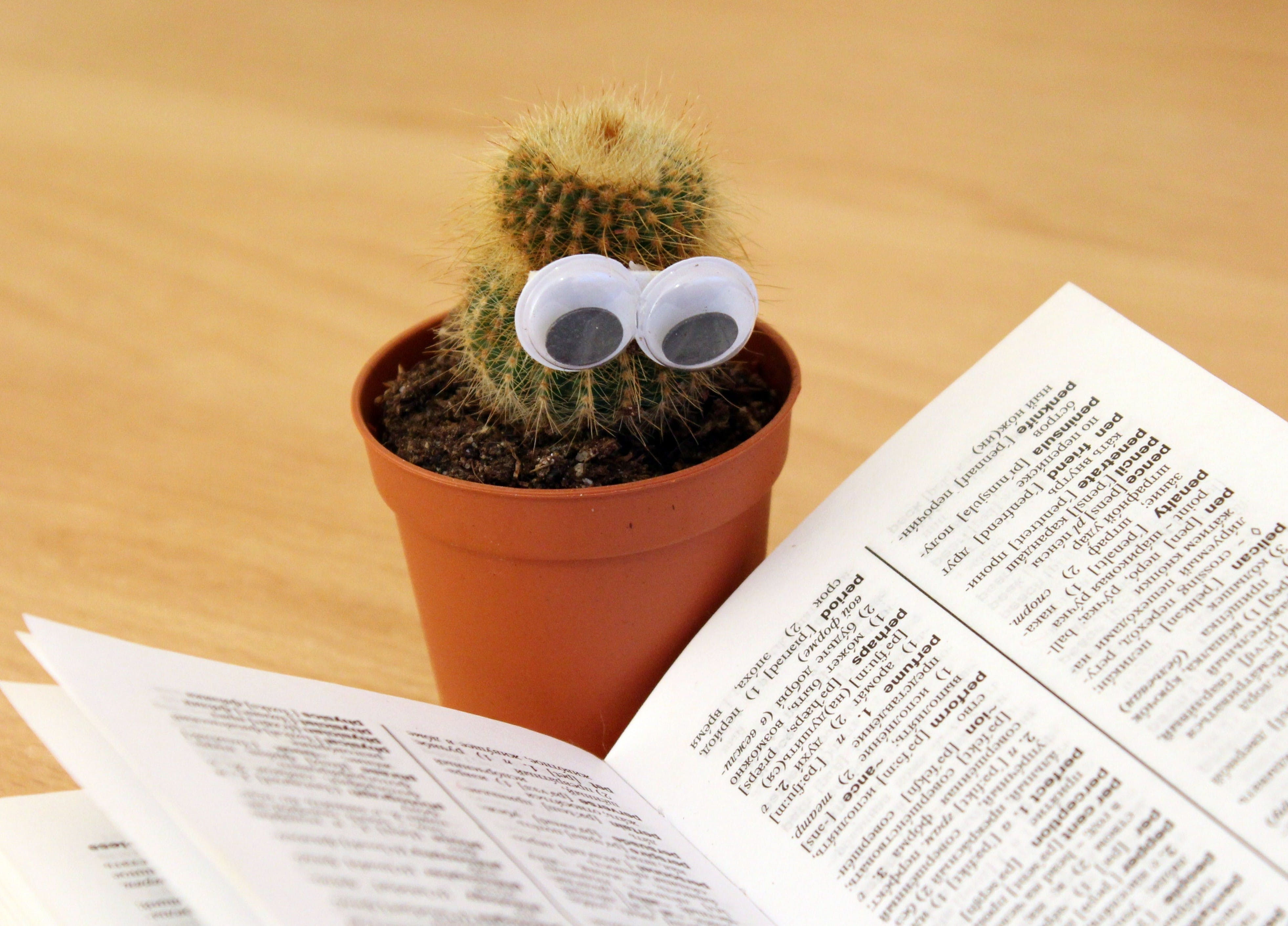 Green Cactus Beside White Book
