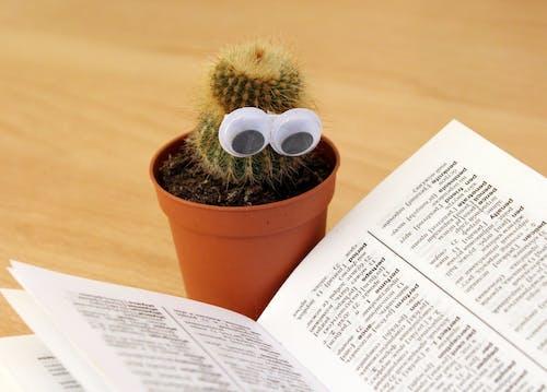 仙人掌, 書頁, 知識, 花盆 的 免费素材照片