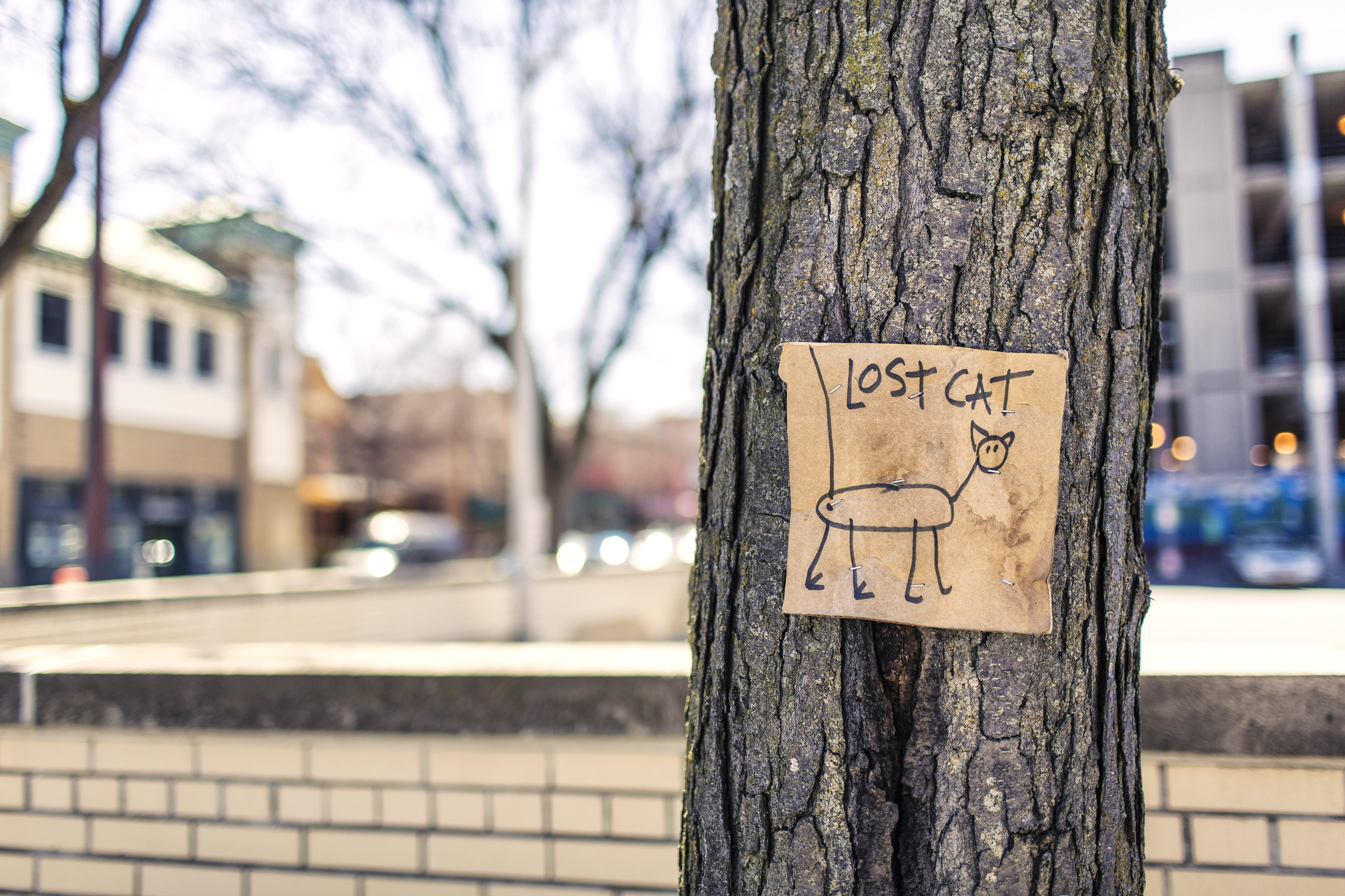 Macro Photography of Brown and Black Lost Cat Signage on Black Bare Tree