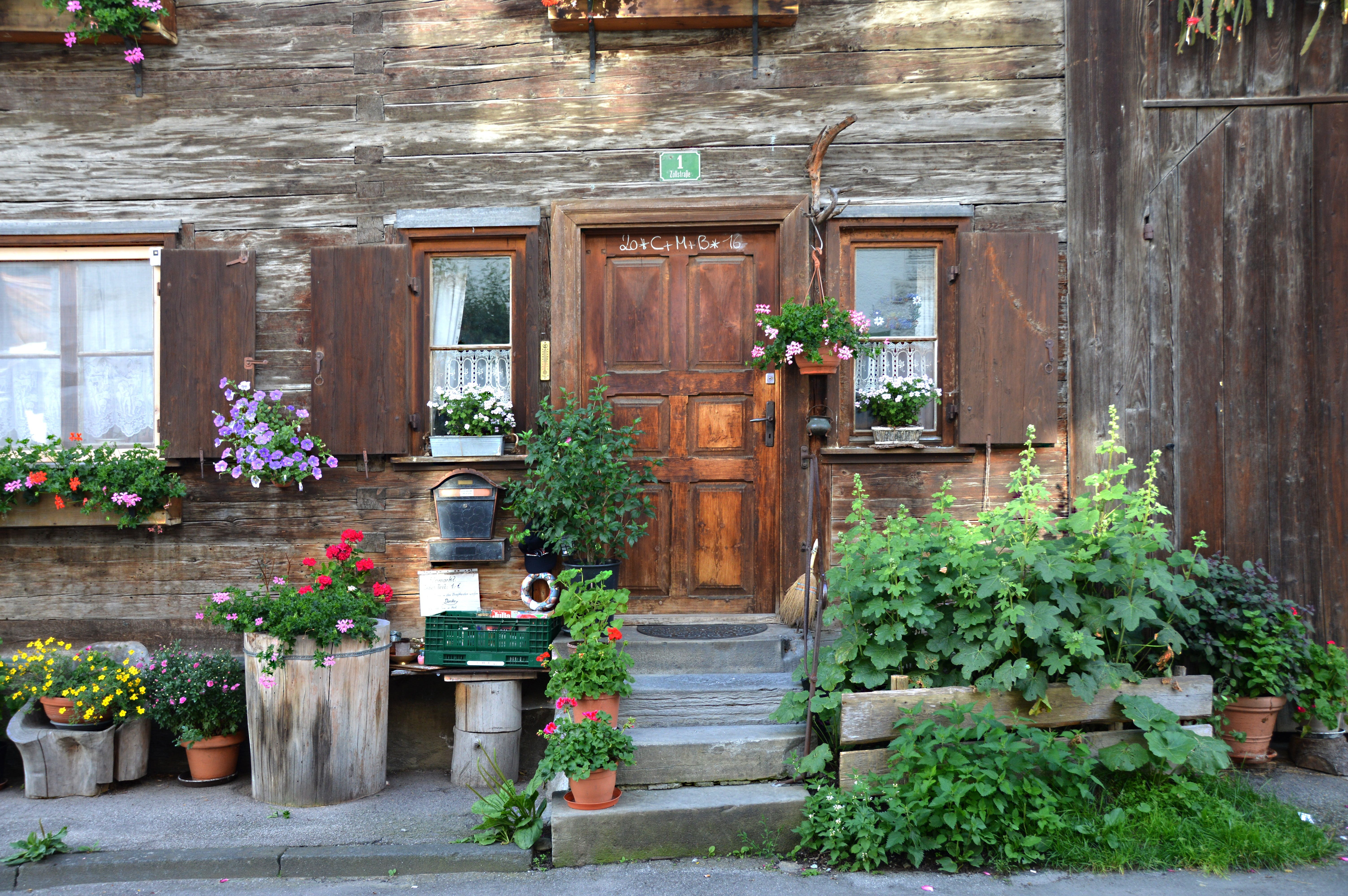 Brown Wooden Door Near Green Plant Outside the House