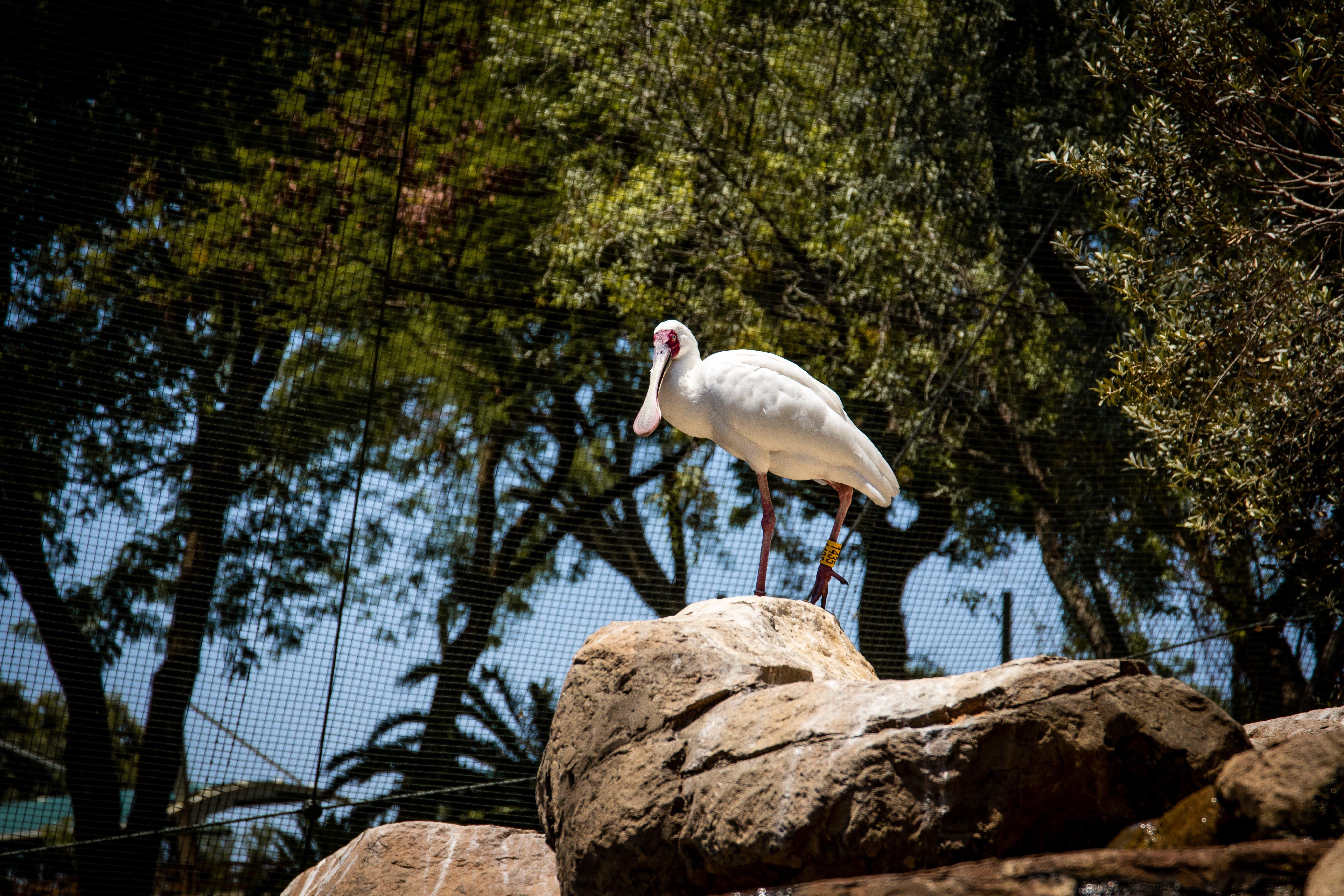 スプーンビル, パーク, 動物園, 岩の無料の写真素材