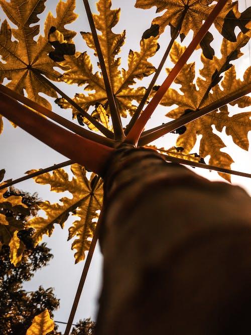 Darmowe zdjęcie z galerii z jesienny las, perspektywa
