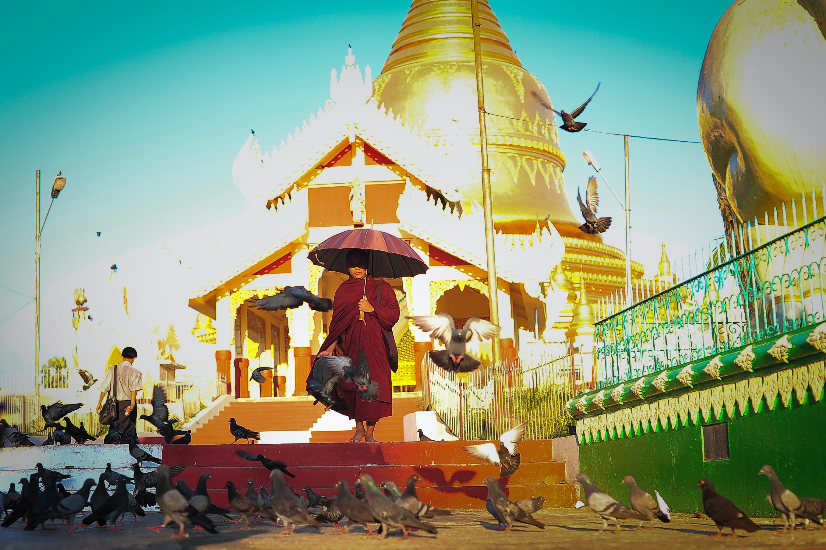 Free stock photo of asia, crows, monk, myanmar