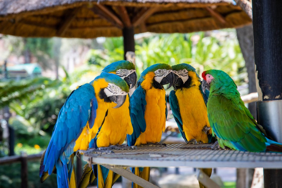 Five Parrots Perched on Brown Wooden Surface