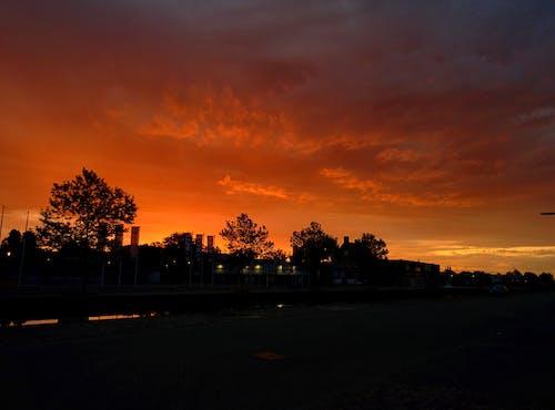 Foto d'estoc gratuïta de alba, arbres, botigues, capvespre