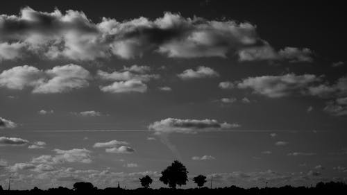 Silhouette of Trees Under Nimbus Clouds during Daytime