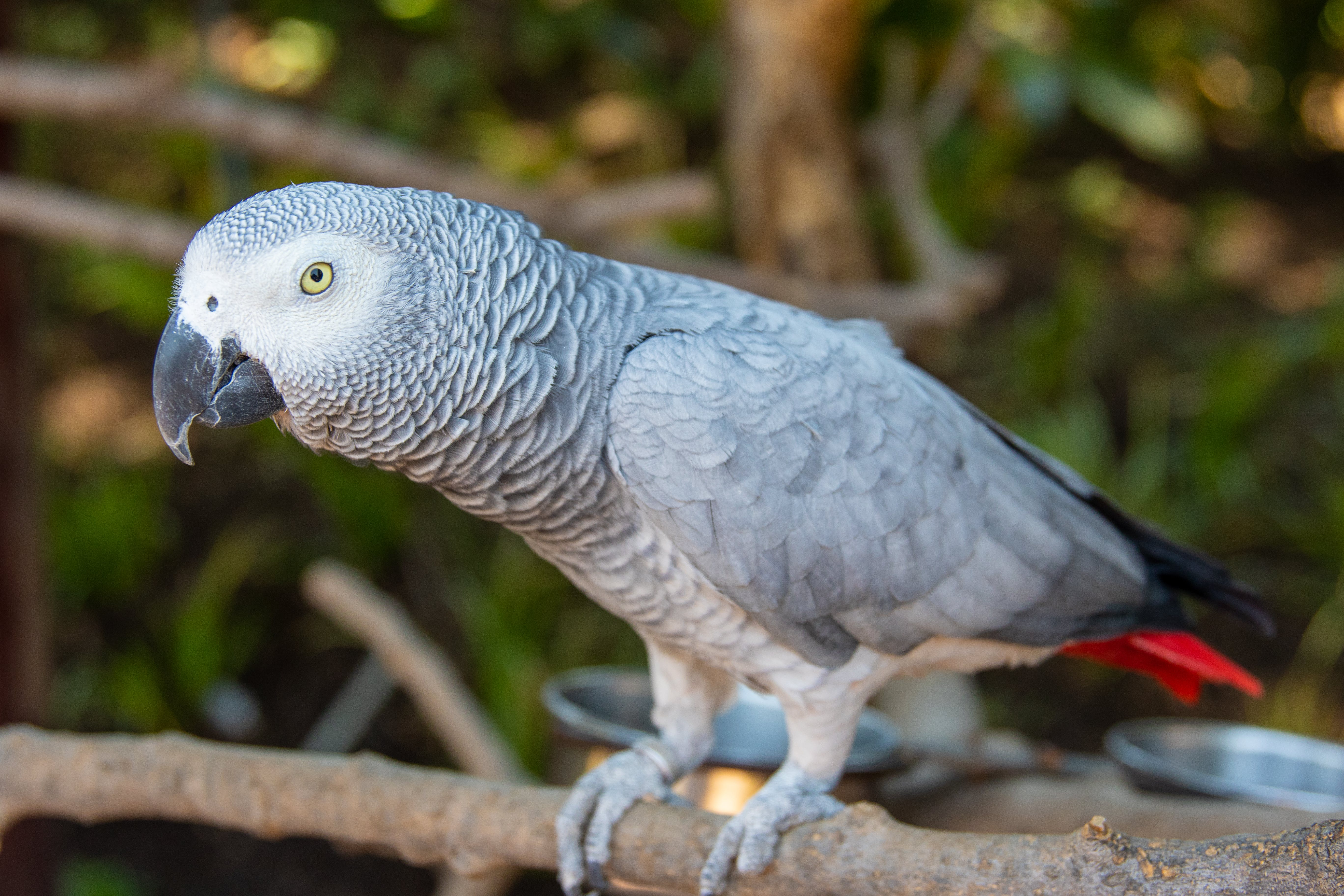 Photo of Grey Parrot Perched On Branch