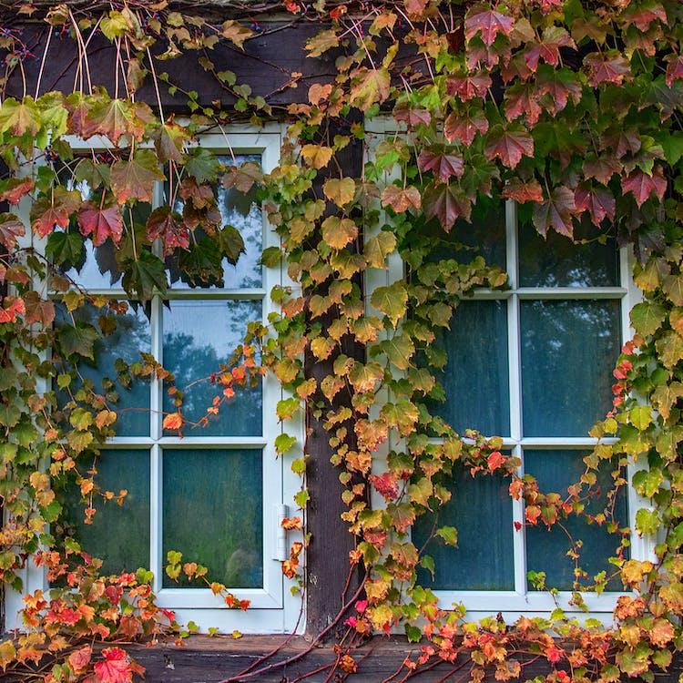 Photo of Window With Vine Plants