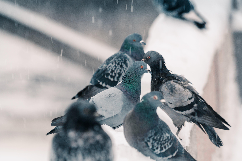 Foto profissional grátis de animais selvagens, animal, asas, aves