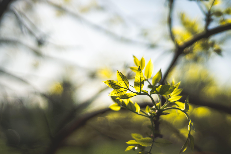 セレクティブフォーカス, 木, 枝, 緑の無料の写真素材