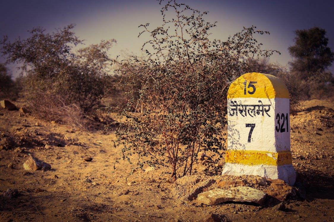 albero, cespugli, deserto