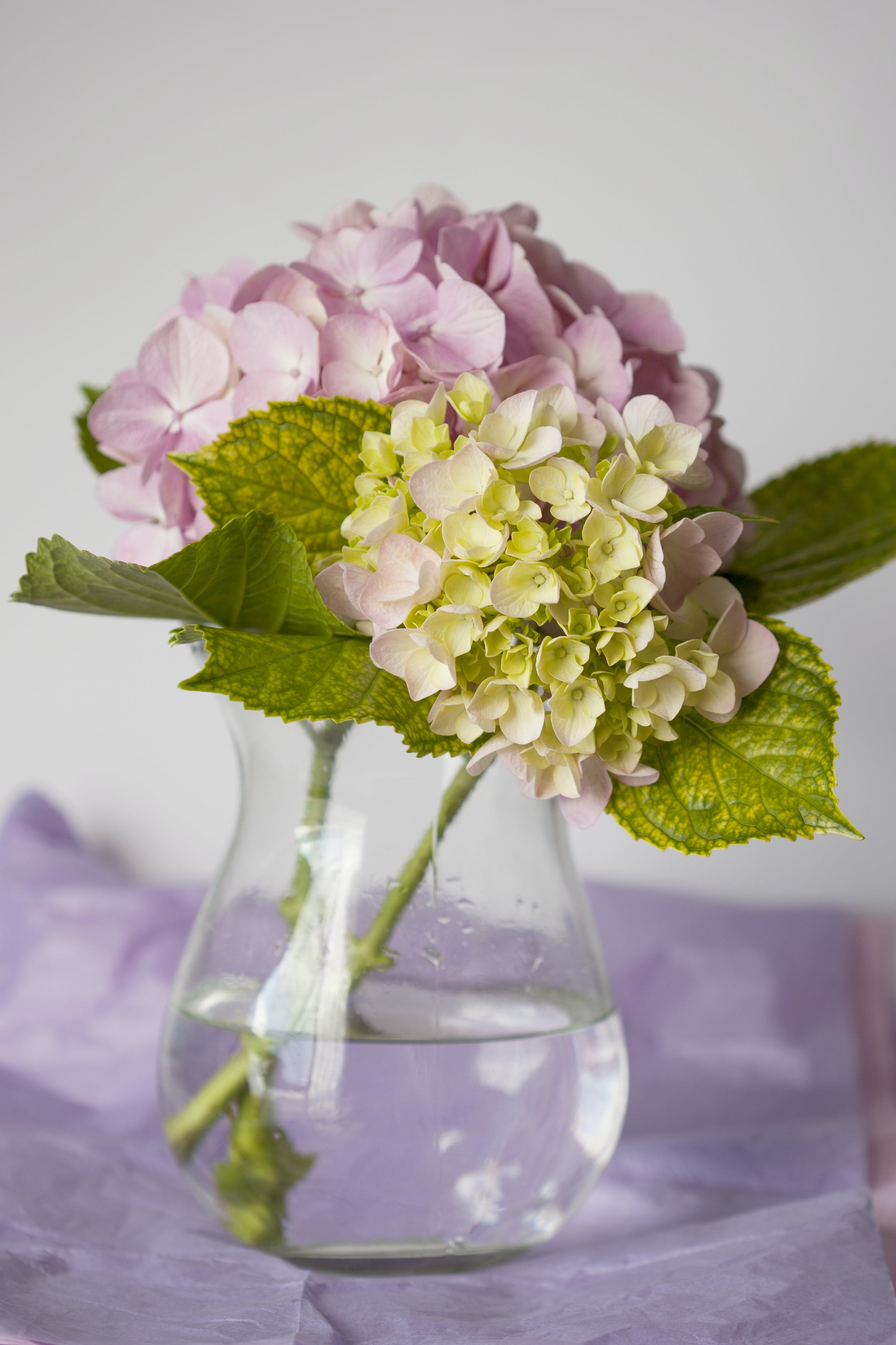 Close-Up Photo of Pink Flowers On Flower Vase