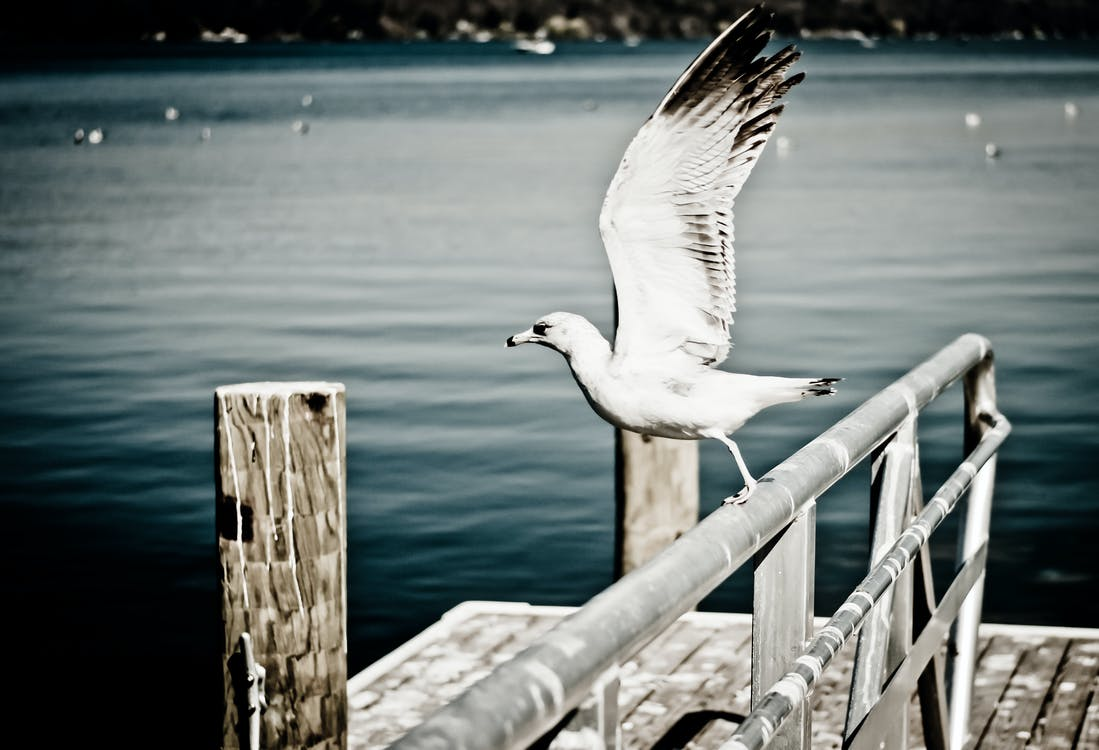 White Seagull Perching on Grey Metal Fence