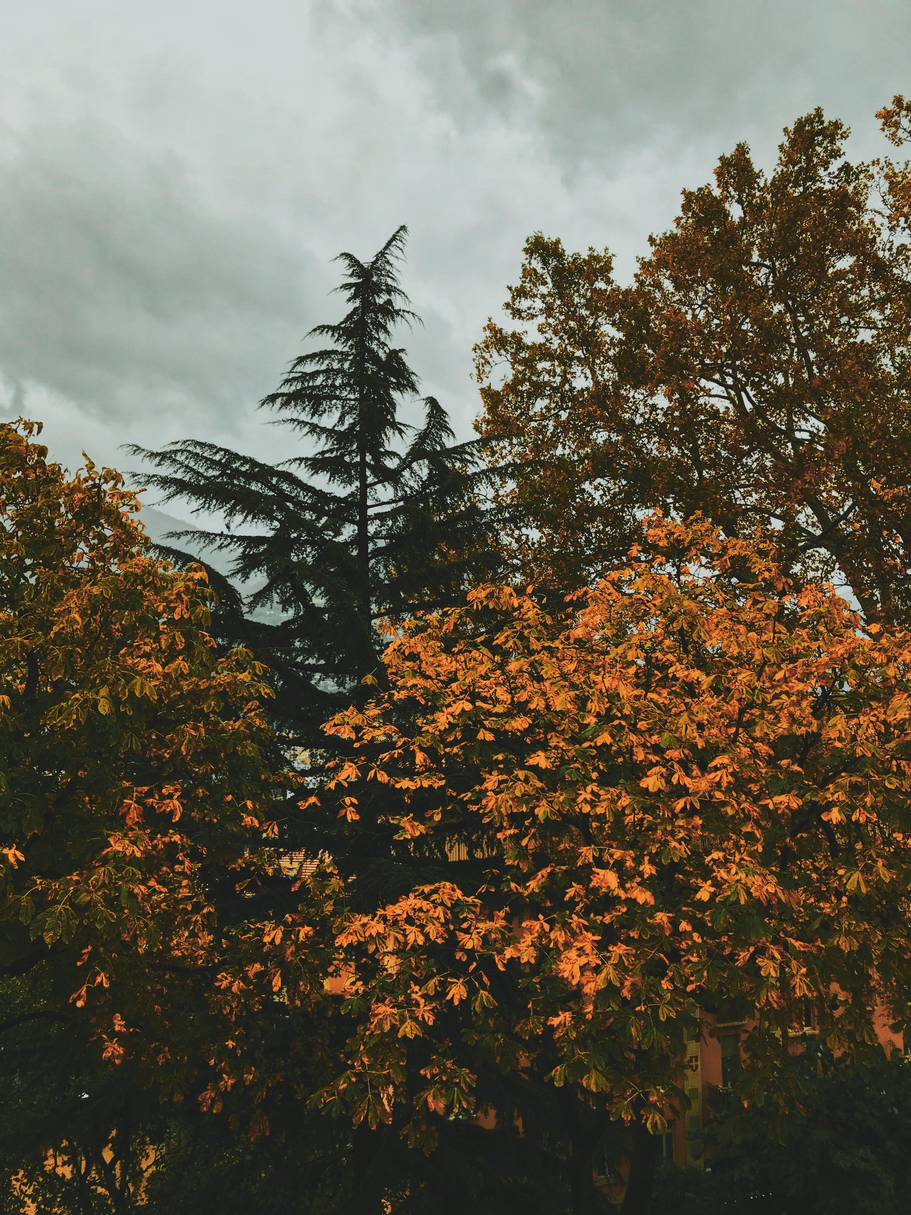 Trees Under Grey Sky
