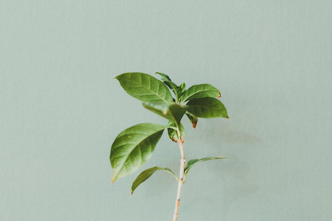 creangă, frunze verzi, perete