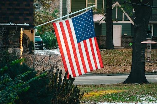 Fotos de stock gratuitas de administración, America, árbol, arbusto
