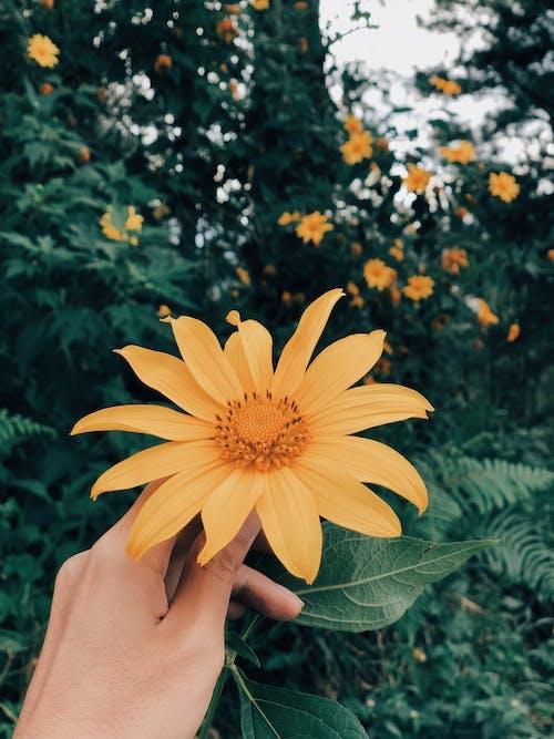 Безкоштовне стокове фото на тему «жовта квітка, квітка, квітка в руці, ліс»