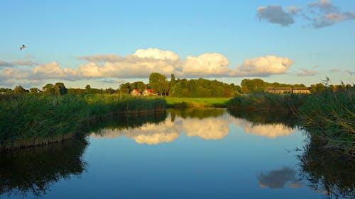 River Between Green Grass at Daytime
