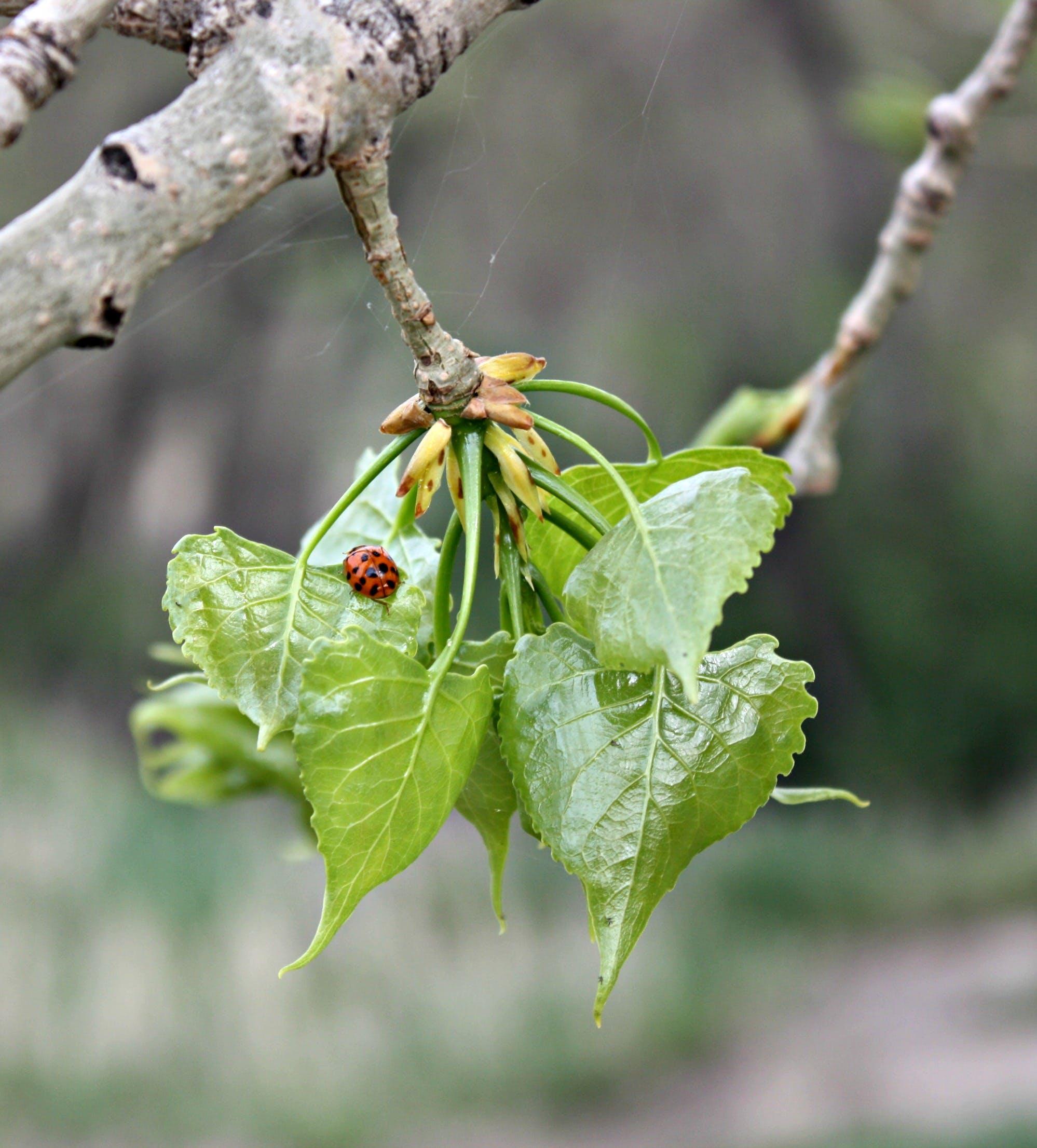Free stock photo of green leaf, ladybeetle, spider web, sunny