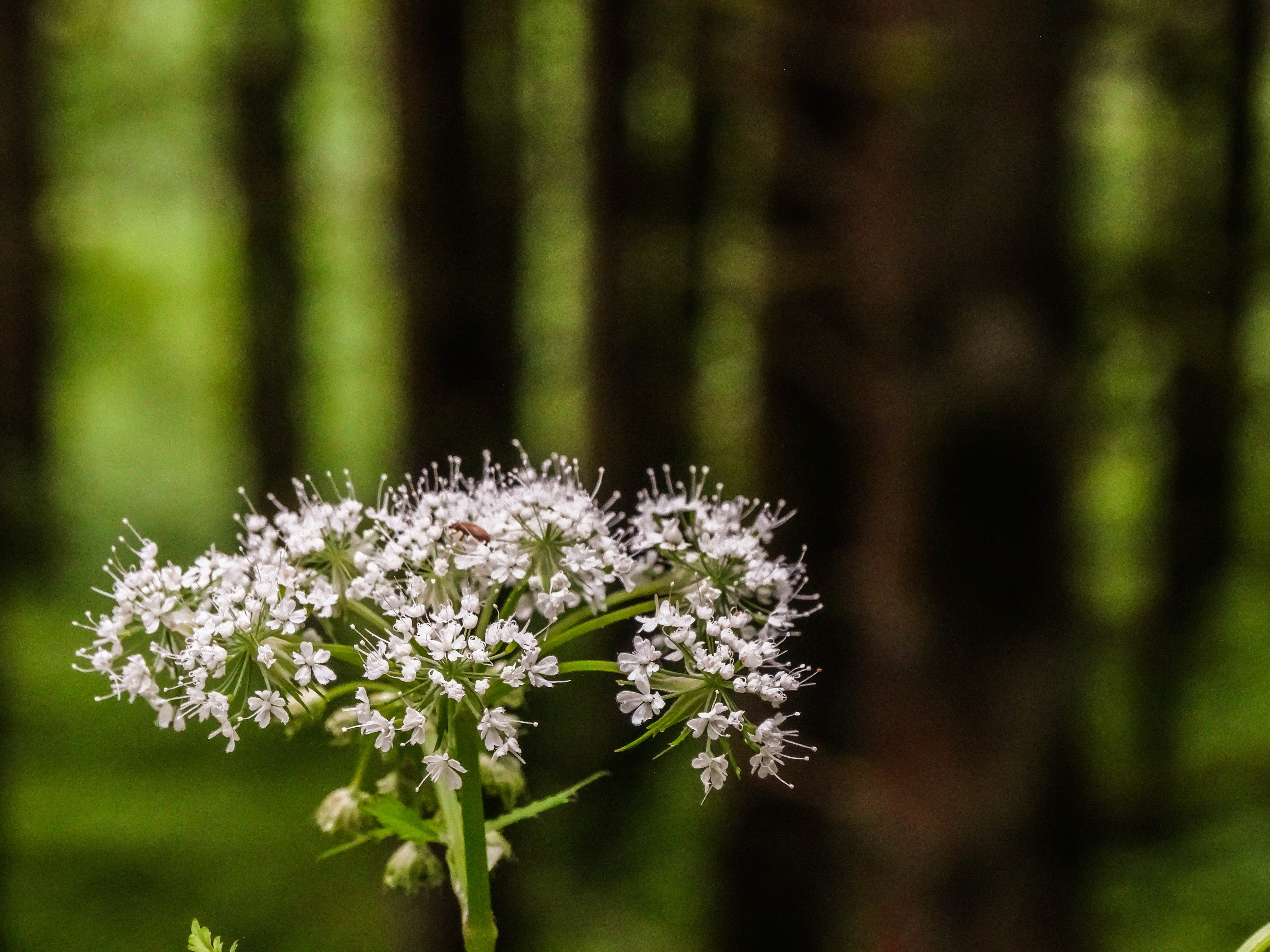 Free stock photo of flower, forest, green, kaprun