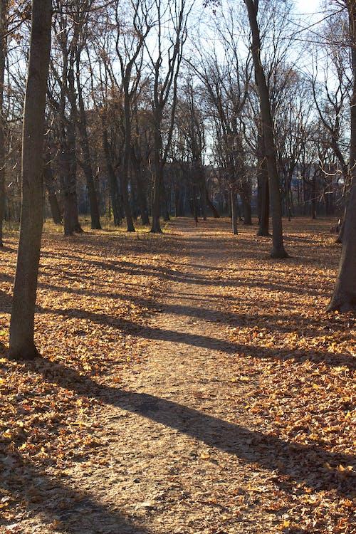 Ilmainen kuvapankkikuva tunnisteilla auringonlasku, puisto