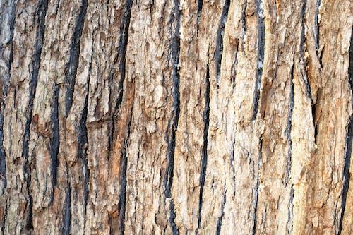 Ilmainen kuvapankkikuva tunnisteilla haukkuminen, puu, puun kuori