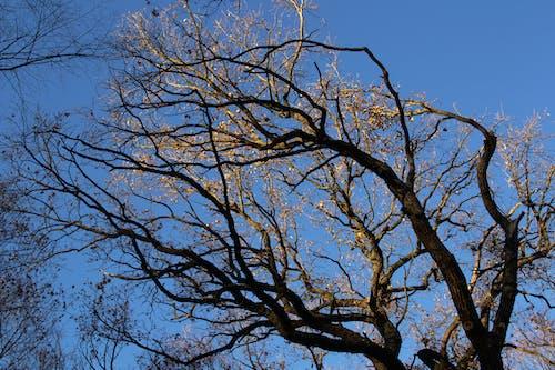 Ilmainen kuvapankkikuva tunnisteilla pilvetön taivas, puun oksat, puut