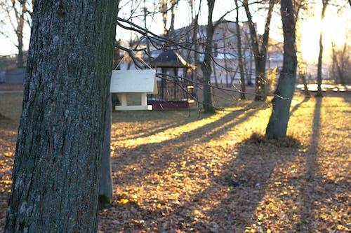 Ilmainen kuvapankkikuva tunnisteilla auringonvalo, lintulauta, puisto