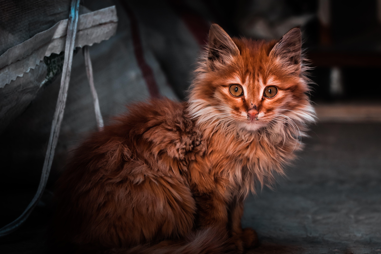 Free stock photo of cat