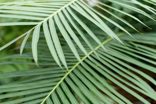 Free stock photo of green, minimal, natural, plant