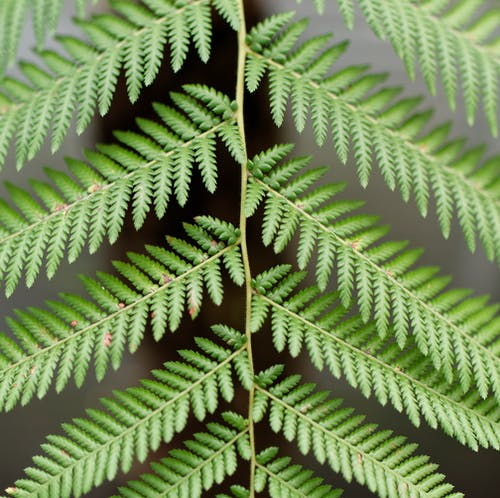 Free stock photo of fern, green, nature, plant