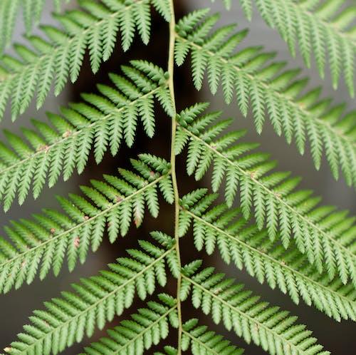 bitki, doğa, eğreltiotu, simetri içeren Ücretsiz stok fotoğraf